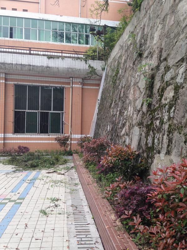 2014北苑校区清理杂草、植树